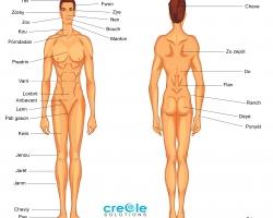 Male body parts.