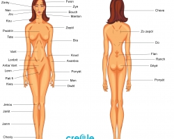 Female Body Parts